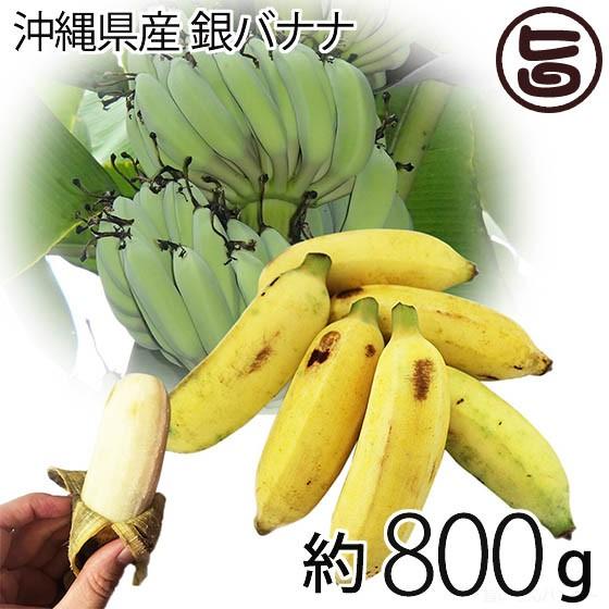 【今が旬】 期間限定 沖縄県産 銀バナナ 約800g 沖縄 土産 バナナ 自然栽培(化学肥料・農薬不使用) 送料無料