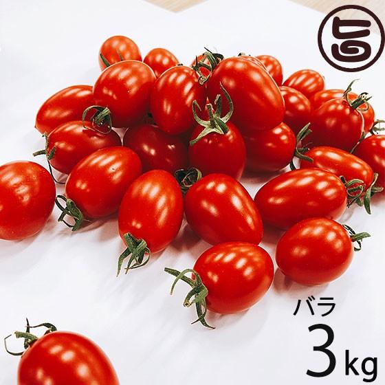 GINZA FARM 高糖度プレミアムトマト 3kg バラ納品 新鮮 高級 条件付き送料無料