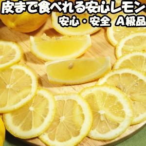 レモン 国産 訳あり 安心 防腐剤 不使用 ノーワックス 2.5kg B品 皮まで食べれる 和歌山 有田さんさん リスボン レモン 2.5kg B わけあり