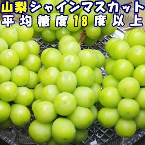 シャインマスカット ぶどう 種無し 皮ごと 産地直送 山梨 種なし ブドウ ギフト 1.5kg 3房 大粒 平均糖度18度 山梨 笛吹 八代 たねなし