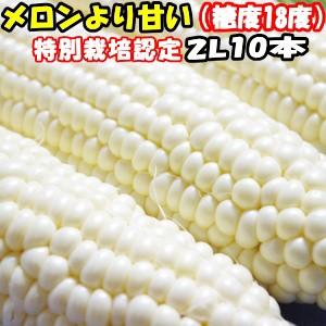 とうもろこし 北海道 甘い メロンより甘い 安心の特別栽培認定 生で食べれる 白い トウモロコシ 平均糖度18度 ホワイトショコラ 10本入