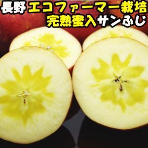 りんご 蜜入り サンふじ 完熟りんごはおいしさが違う 安心のエコファーマー サンフジ 長野 信州 丸茂ファーム 10kg 22〜46玉 訳あり 家庭