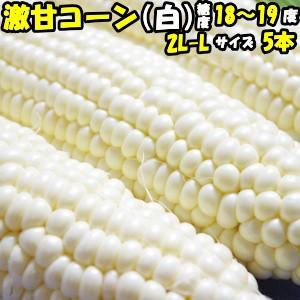 とうもろこし ピュアホワイト 甘い ギフト お中元 送料無料 生で食べれる 白いとうもろこし プレゼント 糖度18〜19度 香川 三豊産 白 ト