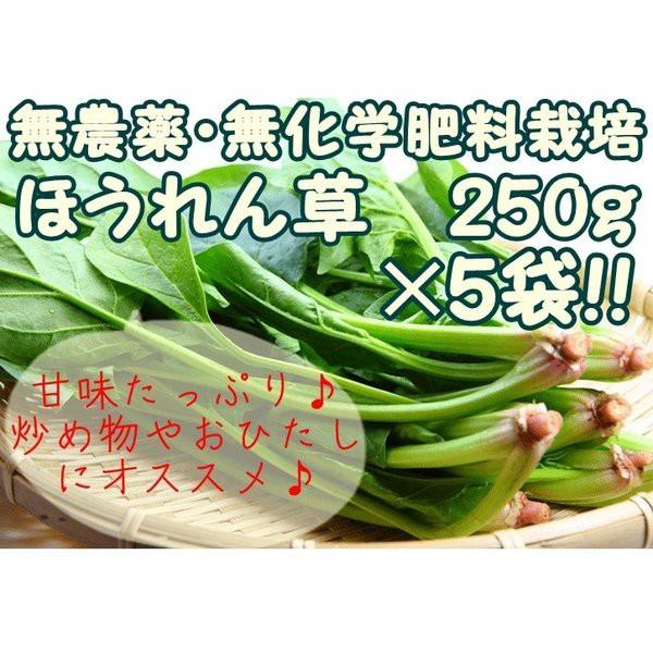 【ほうれん草 5袋セット】 『無農薬・無化学肥料栽培』 千葉県成田市おかげさま農場産