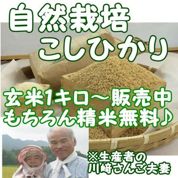 新米 『自然 こしひかり玄米 5キロ』 熊本県天草産 無農薬 無施肥