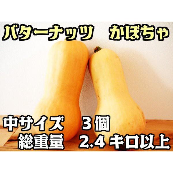 バターナッツ かぼちゃ 2.4キロ(合計3個) 『無農薬・無化学肥料栽培』 埼玉県加須市 遠藤農園産