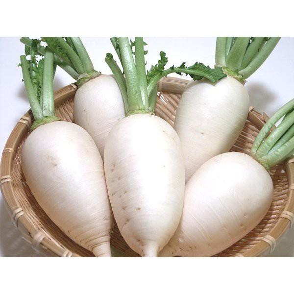 辛味大根 1本 『無農薬・無化学肥料栽培』 埼玉県加須市 遠藤農園産