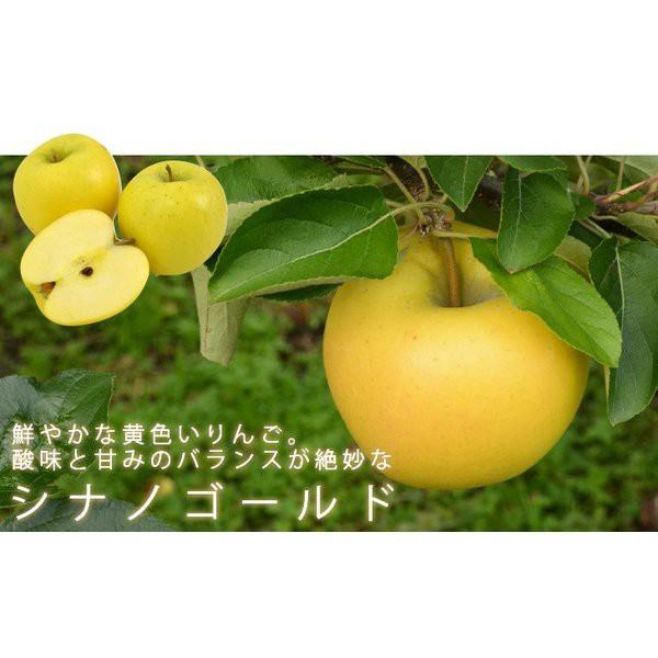 送料無料 シナノゴールド 40玉〜46玉(中玉) 10キロ箱 りんご 長野県産 お取り寄せ