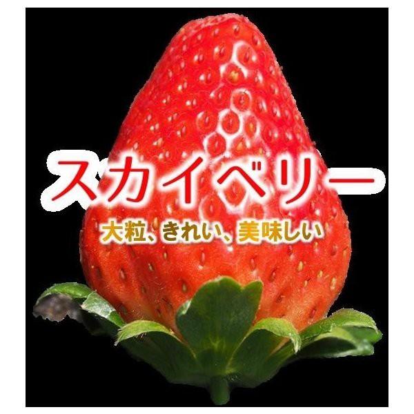 関東圏送料無料 スカイベリー 2パック化粧箱 大粒サイズ 約300g×2パック 栃木県産 苺 いちご イチゴ すかいべりー