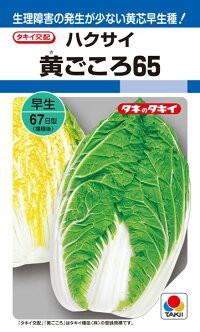 タキイ種苗 ハクサイ 白菜 黄ごころ65 5ml