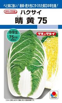 タキイ種苗 ハクサイ 白菜 晴黄75 DF