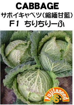 藤田種子 サボイキャベツ(縮緬甘藍)F1 ちりちりーふ 小袋