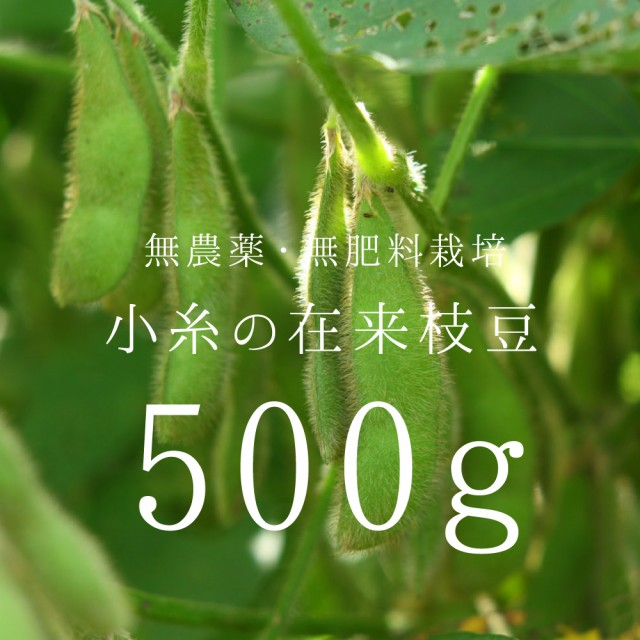 【無農薬・無肥料】有機栽培とは異なる「自然栽培」の「小糸の在来枝豆」枝付き500g【送料無料(送料込み) 産地直送 収穫当日発送 野