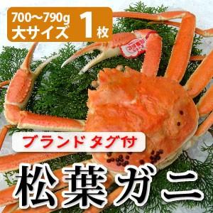 松葉がに700〜790g(大サイズ)×1枚 日本海産 未冷凍 お歳暮ギフト 送料無料(北海道・沖縄を除く)