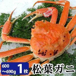 松葉がに600〜690g(中サイズ)×1枚 日本海産 未冷凍 お歳暮ギフト 送料無料(北海道・沖縄を除く)