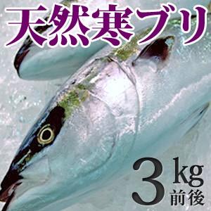 天然ブリ(寒鰤/寒ブリ)3kg前後 送料無料(北海道・沖縄を除く)
