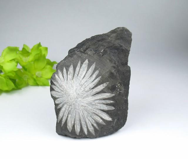 菊花石 クリサンセマムストーン 原石 H E社 喜びに溢れた人生、ビッグバンの力 大変整った見事な菊花 天然石 パワーストーンchrysan012