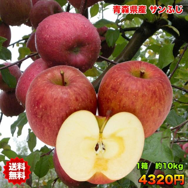 訳あり 青森県産 サンふじ りんご 10kg 送料無料 糖度保証 訳あり りんご 10kg