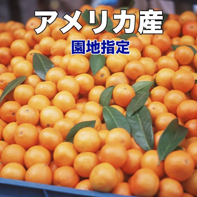 オレンジ ネーブル 送料無料 カリフォルニア産 ネーブルオレンジ 園地指定 糖度保証 約5kg 22玉前後 クール便別途送料必要 ※北海