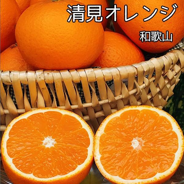 清見 オレンジ 訳あり 送料無料 和歌山県産 清見 オレンジ Lサイズ 5Kg お試し 清見タンゴール