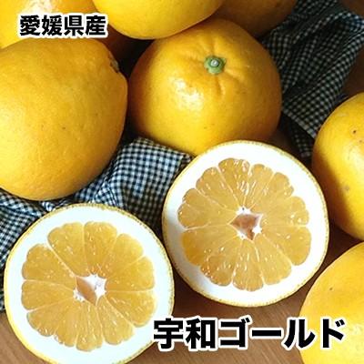愛媛県産宇和ゴールド 2Lサイズ 約5kg 送料無料 ※北海道、沖縄離島は除く