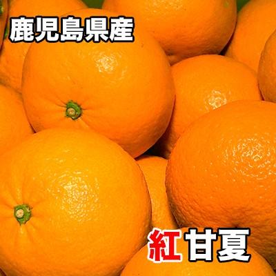 紅甘夏 みかん 5Kg 送料無料 鹿児島県産 紅甘夏 秀品 Mサイズ 5kg ギフト 贈答用