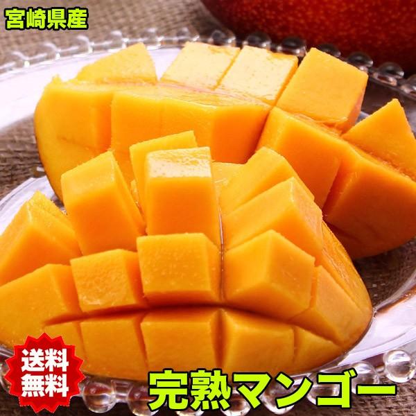 マンゴー 宮崎 完熟マンゴー 4Lサイズ 1玉入 ギフト 母の日 お中元 完熟 送料無料 トロピカルフルーツ プレゼント