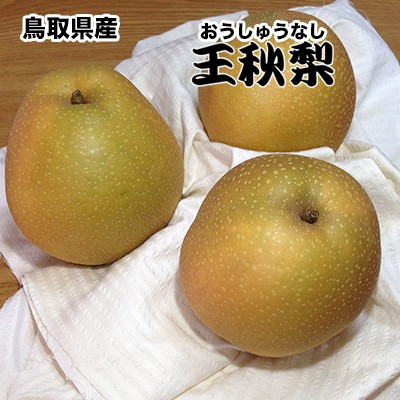梨 なし ナシ 5Kg 鳥取県産王秋梨 約5Kg 赤秀クラス ギフト 秀品 贈答用