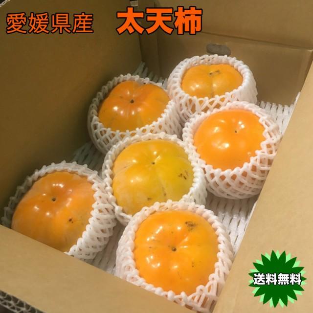 柿 かき 3kg 送料無料 愛媛県産 太天柿 秀品 3kg 6〜8個入 たいてんがき 柿界のスーパースター お試し ギフト
