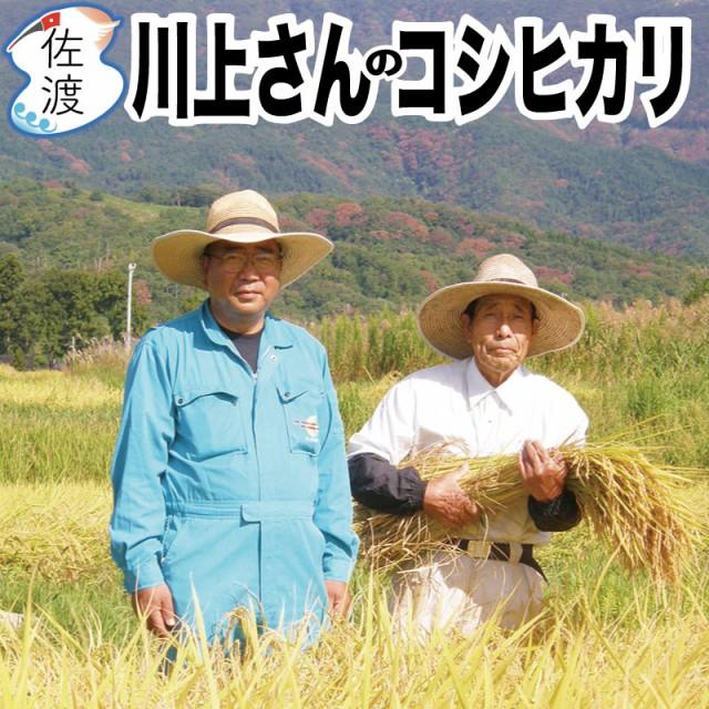 【新米】令和2年産 佐渡産コシヒカリ 10kg (白米/玄米/無洗米/7分づき) 川上さんのプレミアム米 特別栽培米 農薬・化学肥料5割減【全国