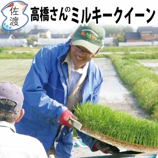 【新米】令和2年産 佐渡産 ミルキークイーン5kg (白米/玄米/無洗米/7分づき) 高橋さんのおいしいお米 モチモチ、ピカピカで甘味のある