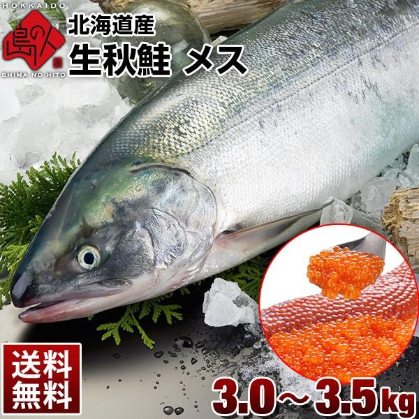 【9月上旬以降発送】礼文島産 生秋鮭 メス(生筋子入り)3.0〜3.5kg【送料無料】 旬の秋鮭を丸ごと一本お届け! 新鮮なイクラもまるごと入