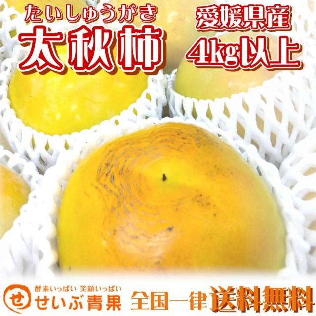 茶箱 愛媛県産 太秋柿 4kg以上