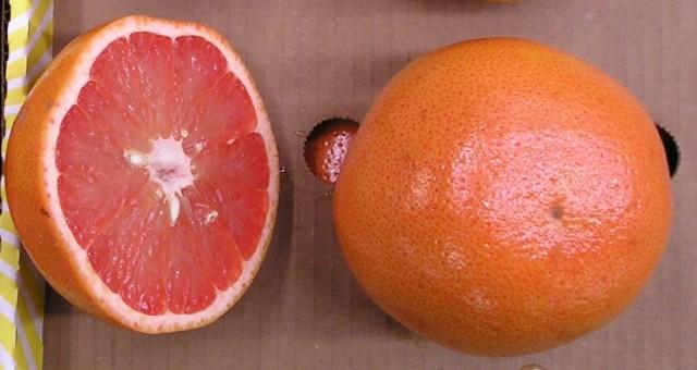 【毎日の健康に1日1個】グレープフルーツ ルビー フロリダ産 40玉 15Kg