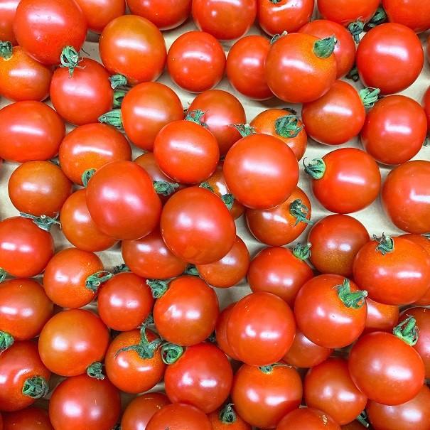 プチトマト 150gパック 熊本県産他