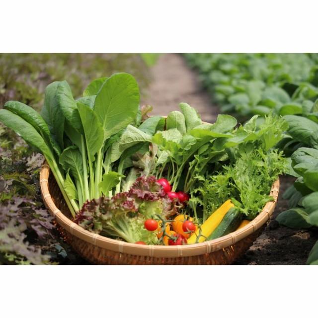 有機栽培サガンベジの超安心安全「葉物野菜セット」6か月定期便