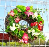 「ベゴニアのハンギング*リング」開花期間:春から晩秋まで(リース/玄関 寄せ植え 春 寄せ植え/セット/ギフト/花/植え/鉢植え/壁掛け/ハン