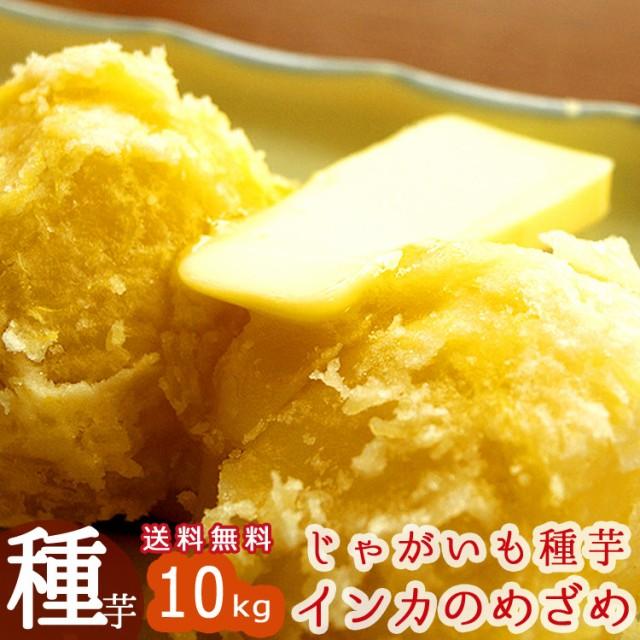 じゃがいも 種芋 種イモ 送料無料 インカのめざめ 種芋10kg 北海道産 (苗 種 ばれいしょ ジャガイモ 家庭菜園 苗 インカのひとみ