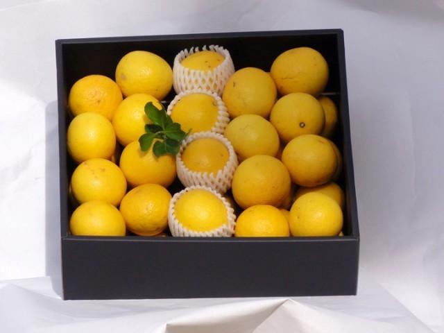 「特選小夏(柑橘類)」(贈答箱入り) 5Kg(M〜Lサイズ30個〜45個入り)(送料込))(5月7日から出荷)