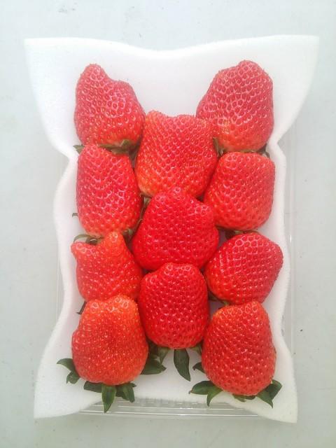 幸せイチゴ大粒形いろいろ!(静岡限定品種:きらぴ香)280g×2パック