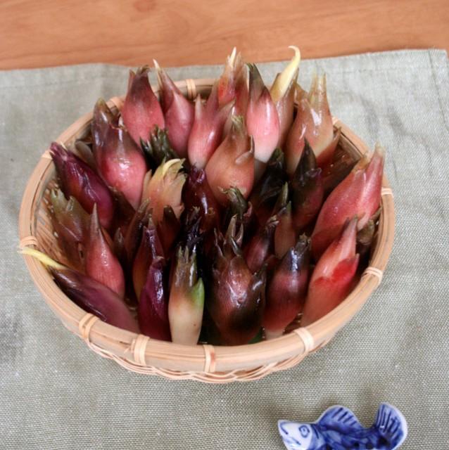 【山菜苗】ミョウガ(4株)