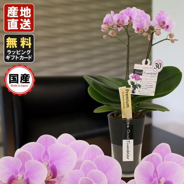 ミニ胡蝶蘭 ギフト オーキッドタンブラースリム チュンリー 2本立 ピンク/お花 プレゼント 生花 鉢植え お中元 お歳暮 敬老の日 おじい