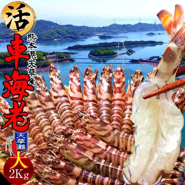 車海老 活【大L】天草 車えび 2kg 熊本県産 獲れたて 生き活き 養殖場直送 送料無料