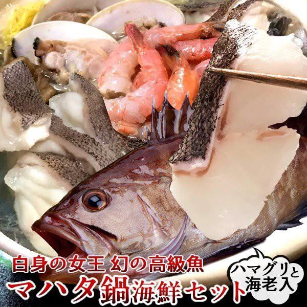 マハタ 海鮮鍋セット(エビ・ハマグリ付き) 三重県尾鷲産 活魚養殖場 幻の高級魚 白身魚の最高峰 まるごと1尾