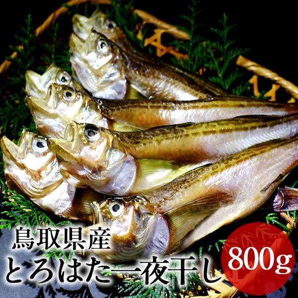 とろはた ハタハタ一夜干し 大ぶりのはたはた 日本海 鳥取県 酒の肴 希少価値 20cm以上 【送料無料】