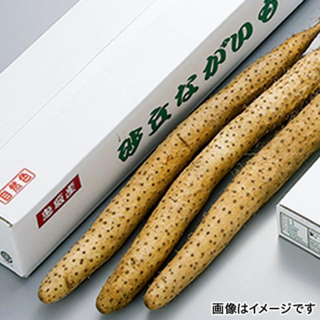 【送料無料】 鳥取 砂丘長芋 3kg |直送品|お取り寄せグルメ ギフト プレゼント HIS ID:H0030623