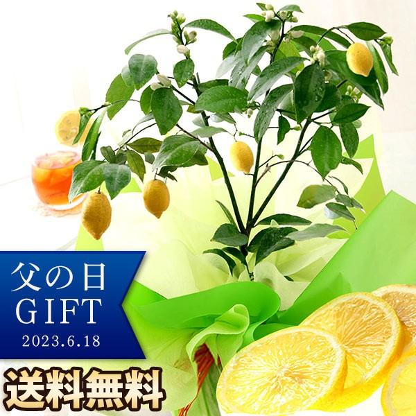 父の日 ギフト プレゼント 花 鉢植え 果樹鉢 レモン ペピーノ ヒマワリ アレンジメント 送料無料 メッセージカード イベントギフトC 2021