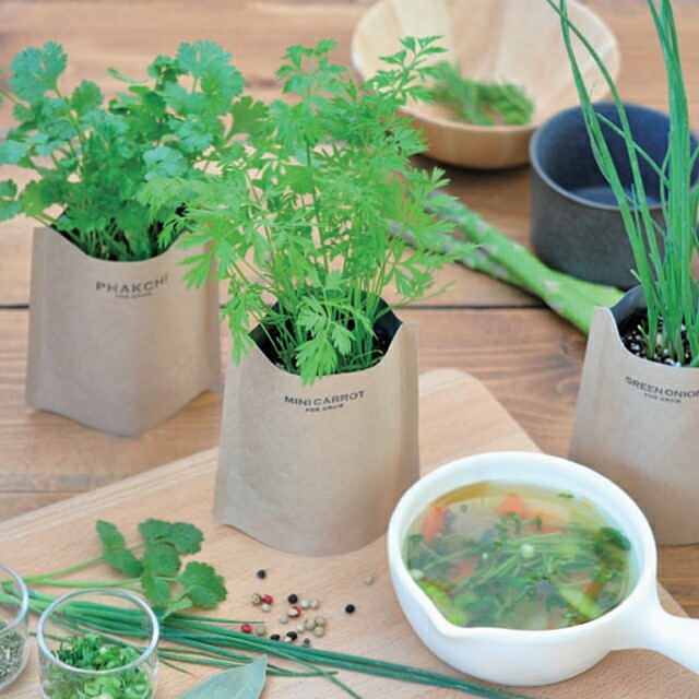 聖新陶芸 育てるスープ GD795 パクチー ミニキャロット 青ネギ ホウレン草 おはよう朝日土曜日です