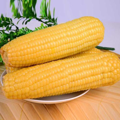 黄糯玉米【10本セット】黄もちとうもろこし 真空パック 即席トウモロコシ 調理済み 温めるだけ 250g×10