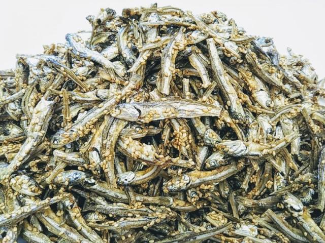 ごまいりこ 1000g 国産 チャック袋 九州醤油味 SESAME IRIKO 1kg 黒田屋